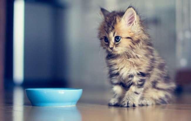 изоляция котенка