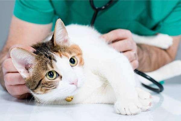 обследование ветеринар