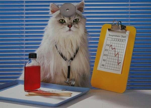 лечение животного