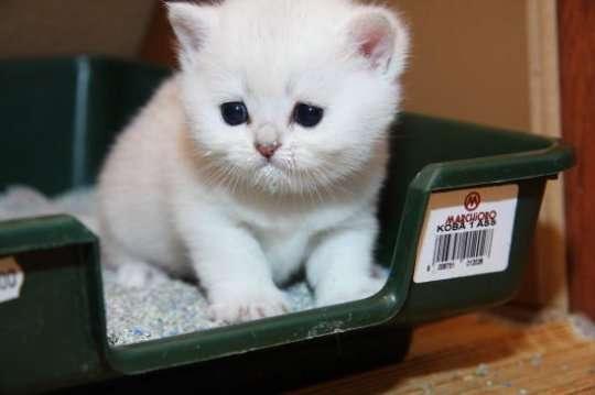 котенок лечение