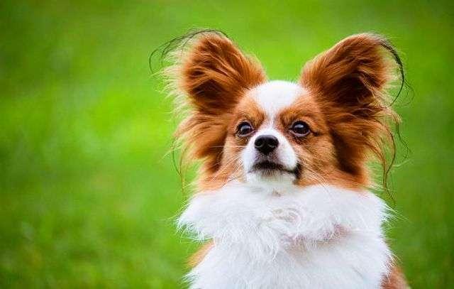 собака и глисты