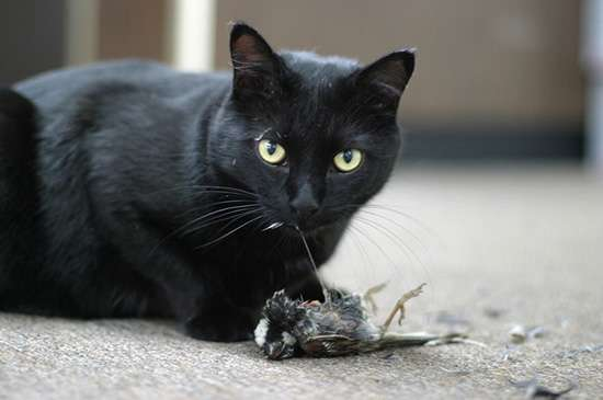 заражение кошки