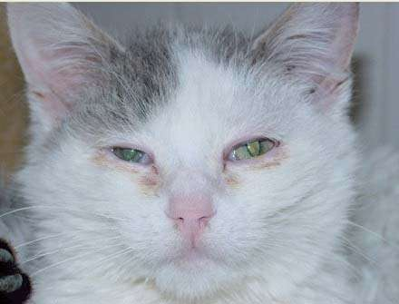 хламидии у котят