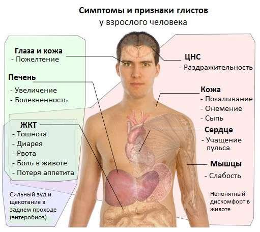 симптомы глистов
