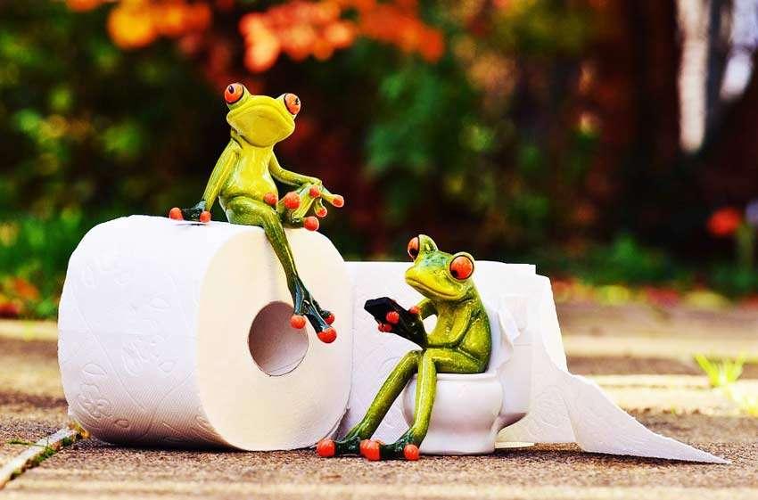 жабы на унитазе